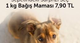 26 Ağustos Dünya Köpek Günü'ne Özel  Bağış Kampanyası!